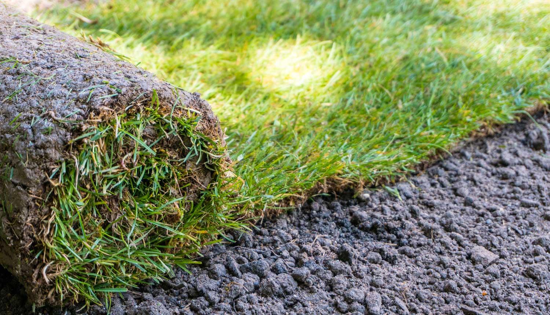 freshly laid sod yard