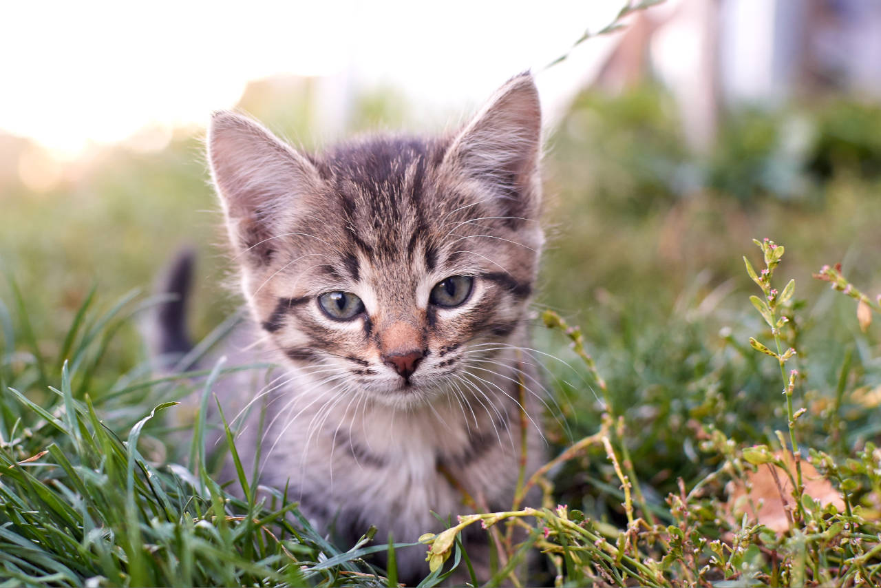 kittens age much more quickly than a human, especially in their first two years