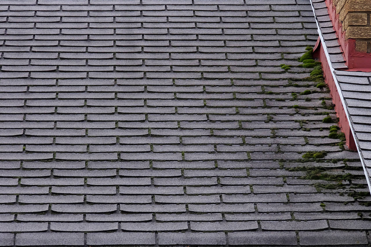 roof with moss growing on the shingles