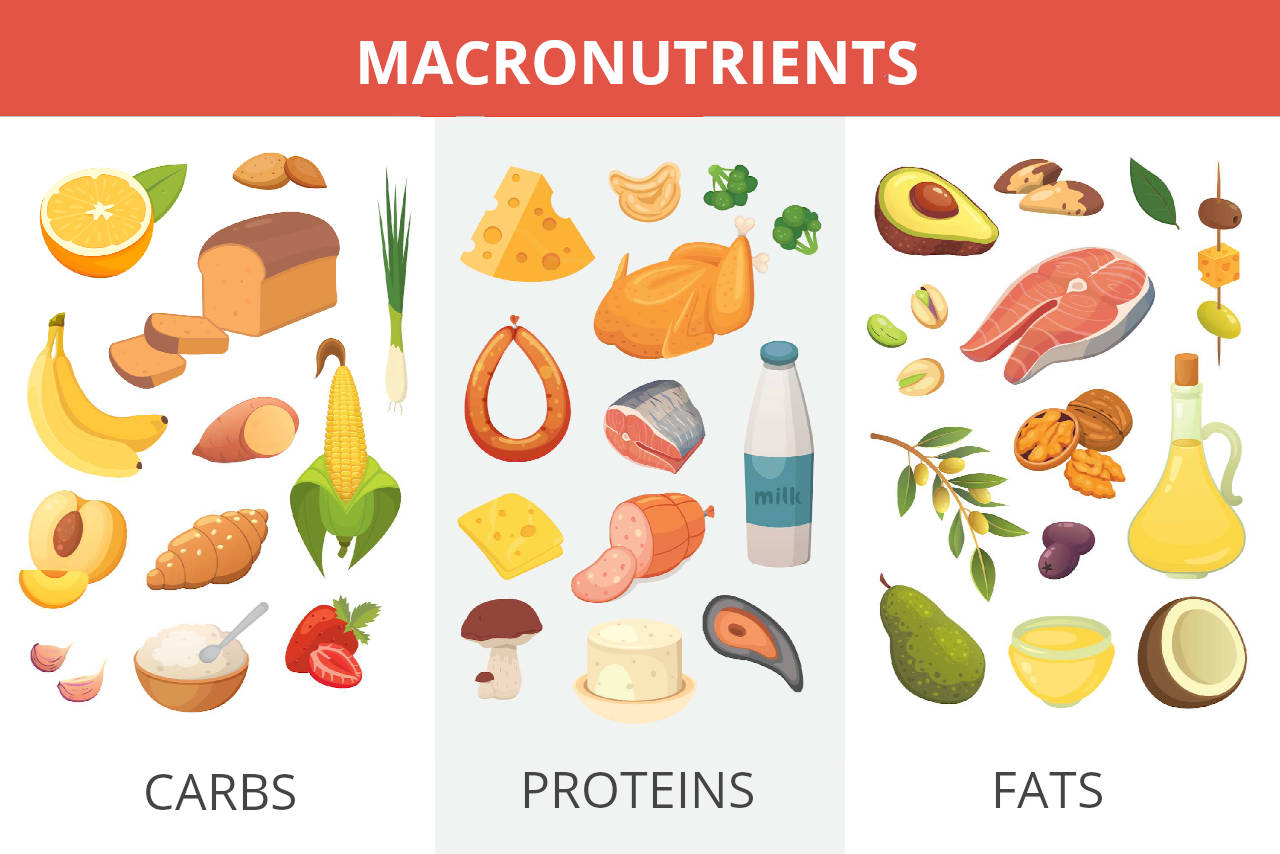 graphic showing common foods in each macro group: (carbs, proteins, fats)